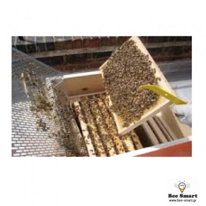 Βιολογικό μελίσσι 10 πλαισίων by www.bee-smart.gr
